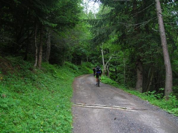 Bosco di Ossasco