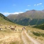 Val della Forcola, verso Livigno